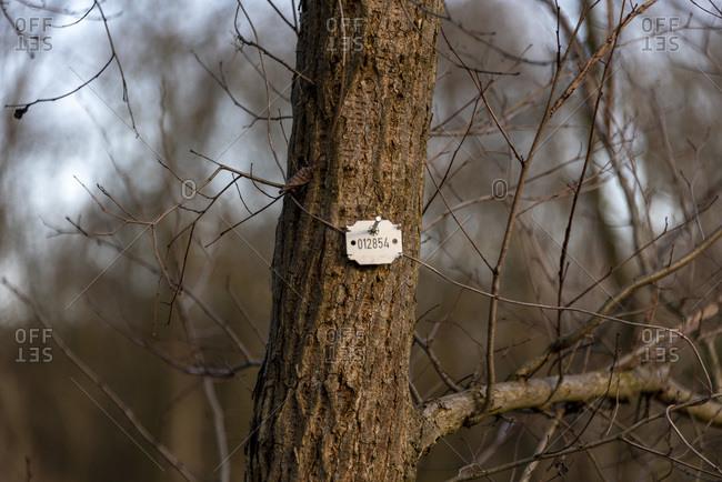 Barren tree in forest in winter
