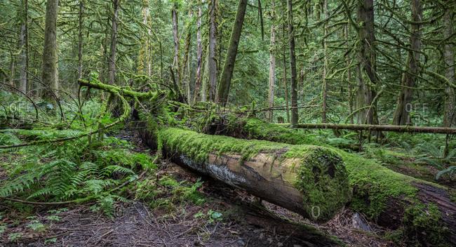 Canada, British Columbia, forest, log