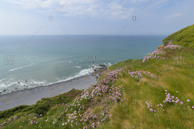 Coast in summer, Millook Haven, Bude, Cornwall, South West England, England, United Kingdom, Europe