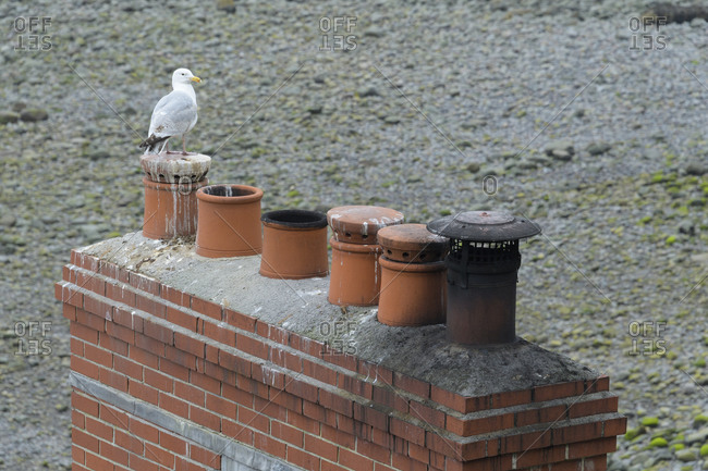 Chimney with seagull, Clovelly, Devon, South West England, England, United Kingdom, Europe