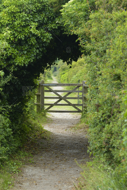 Overgrown tunnel way with gate, Dover, Kent, South East England, England, United Kingdom, Europe