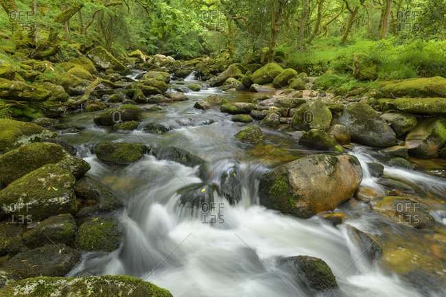River in the forest, River plym, Dewerstone wood, Plymouth, Devon, England, United Kingdom, Europe