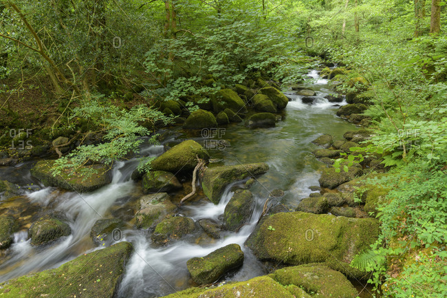 River in the forest, River meavy, Dewerstone wood, Plymouth, Devon, England, United Kingdom, Europe