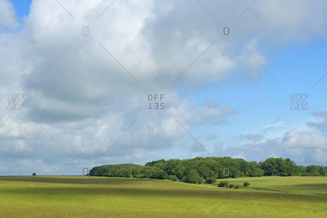 Landscape in summer, Stonehenge, Salisbury, England, South West England, United Kingdom