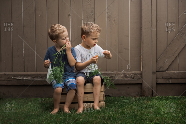 Two little boys sitting on wooden crate eating carrots
