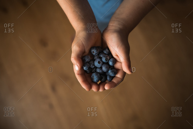 Overhead view of child's hands holding blueberries