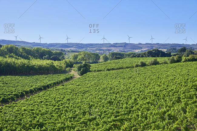 Green vine filled fields with wind turbines in the distance, Lisbon region, Portugal