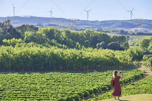 Tourist taking pictures of a green vineyard landscape in Lisbon region, Portugal