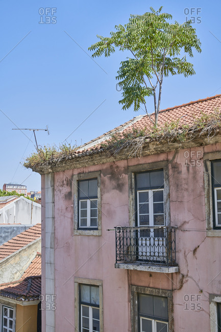Tree growing in a rooftop of apartments in the Gloria neighborhood in Lisbon