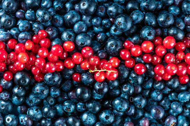 Fresh blueberries and red currants texture, shot from above