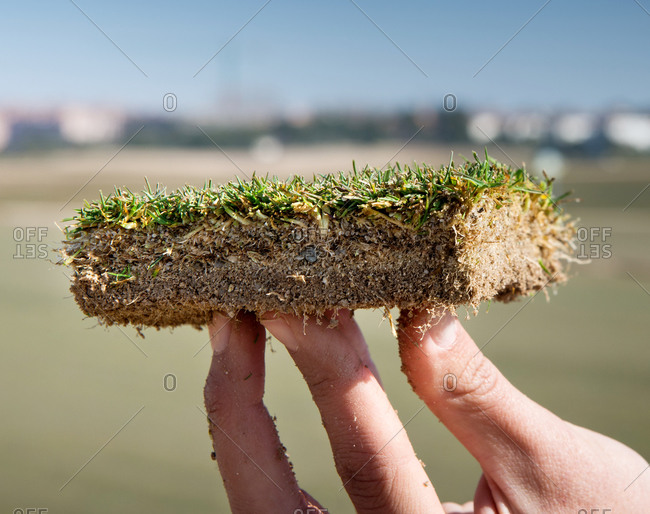 Closeup of crop faceless person with dirty fingers demonstrating slice of ground with pointed grass and soft texture in daylight