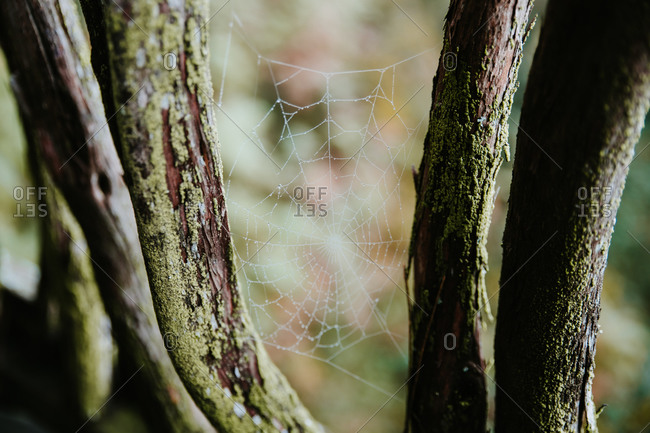 Spider web between tree branches in woods on cloudy day in Biscay Basque country in Spain