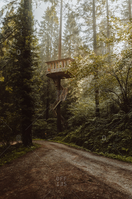 Huge wooden house placed between pine trees above ground in woods in Biscay