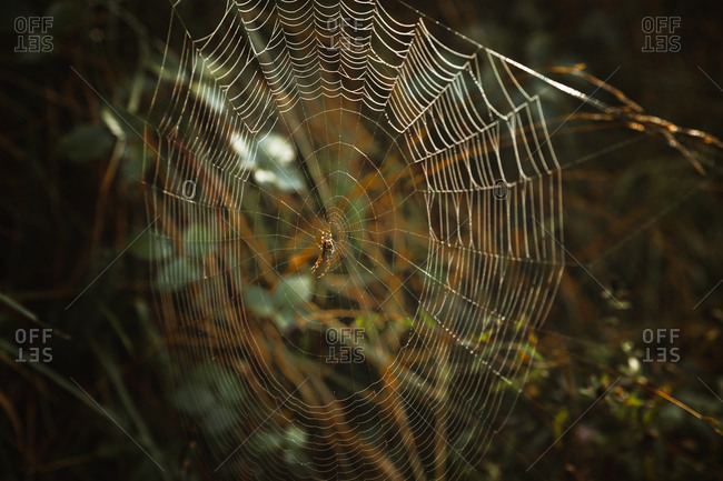 Side view of spider in spider web between tree branches in woods on cloudy day in Biscay Basque country in Spain
