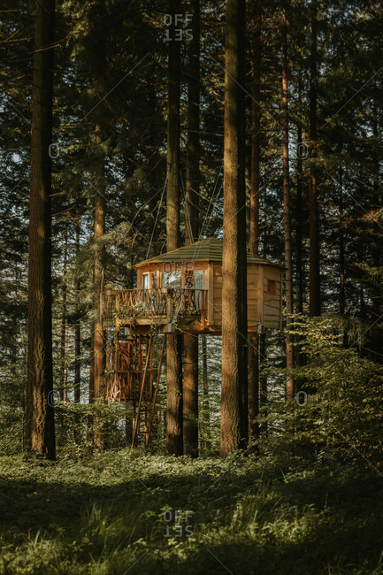 Wooden house placed between pine trees above ground in woods in Biscay at dawn