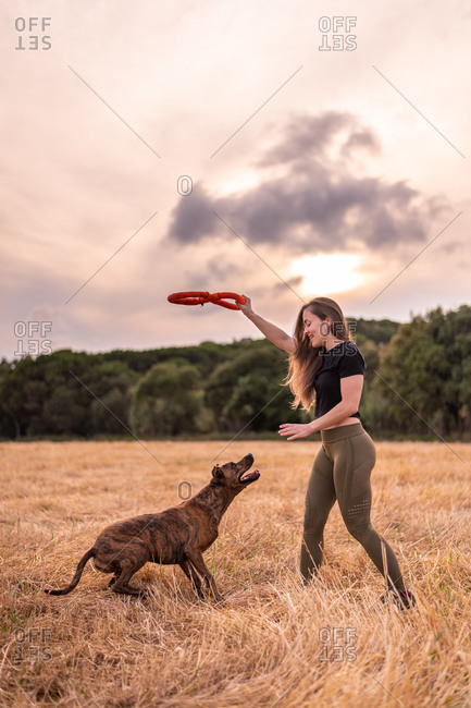 Side view of glad female in casual clothes holding toy while playing with adorable big dog on meadow in autumn under cloudy sky