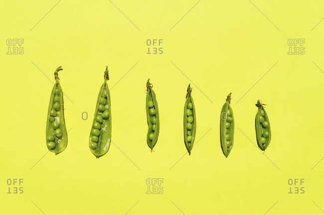 Studio shot of row of green pea pods against yellow background