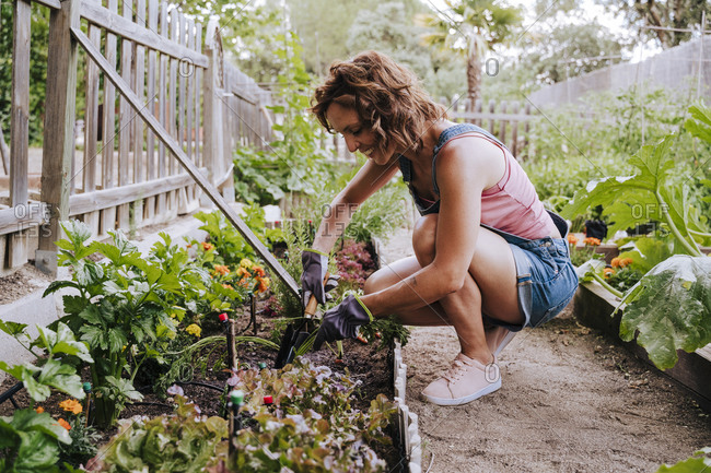 Smiling mid adult woman collecting vegetables from raised bed in community garden