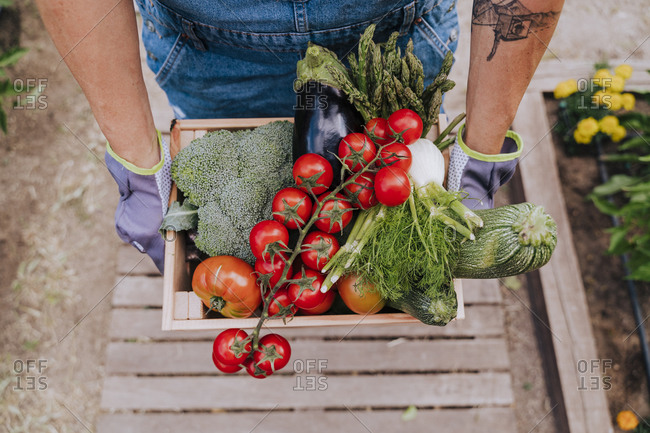 Close-up of woman holding various vegetables in wooden crate at community garden