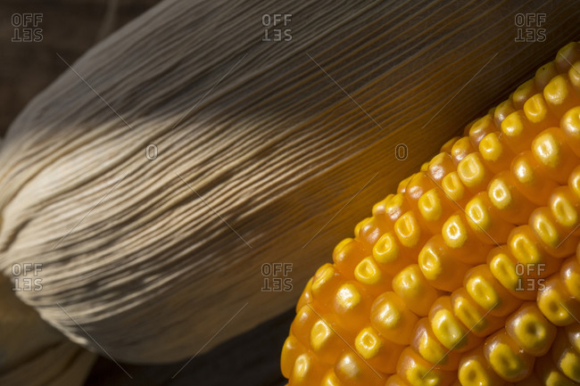 Yellow corn on the cob beside corn in the husk