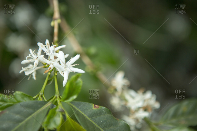 Small white flowers blooming on a branch