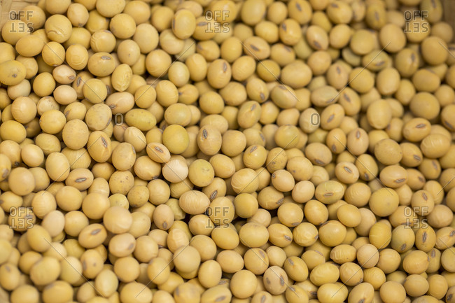 Close up detail of freshly harvested soybeans
