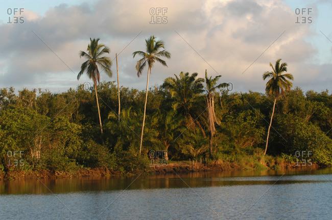 Dense rainforest on the coast of Brazil