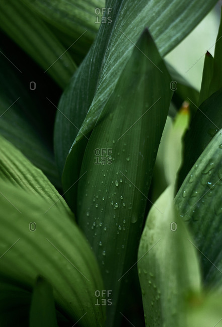 Raindrops perched on a plant branch