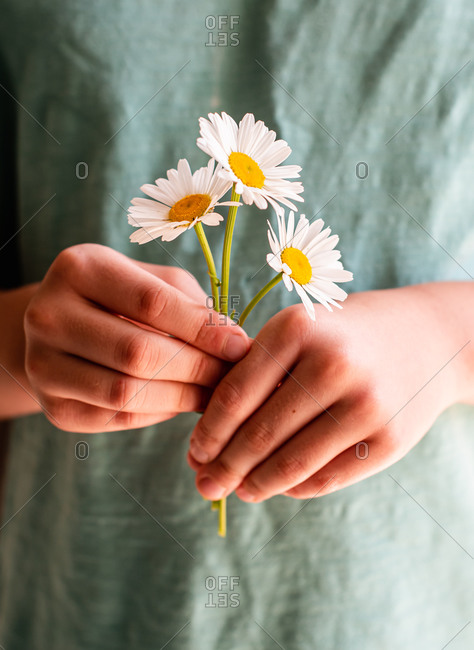 Close up of a child's hands holding a bunch of daisy flowers.