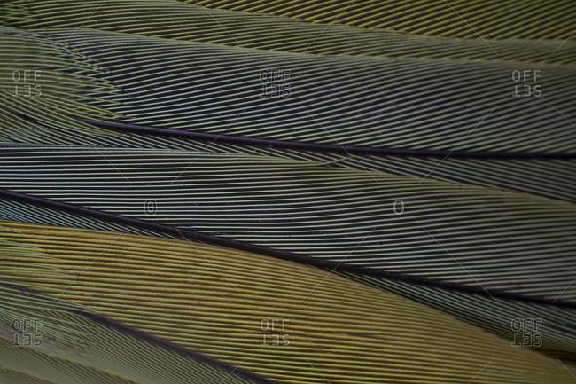 A macro shot of multi colored bird feathers, geometrical pattern