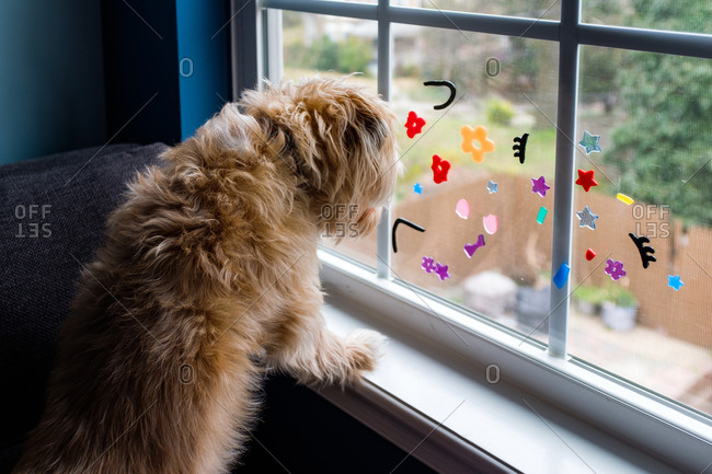 Small furry dog looks out window with kid's stickers on it