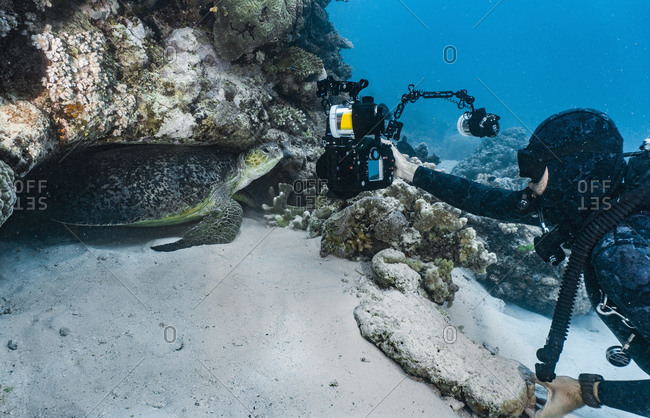 Diver takes picture of a giant green sea turtle (chelonia mydas)