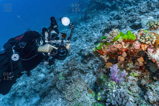 Photographer taking picture of coral at the great barrier reef