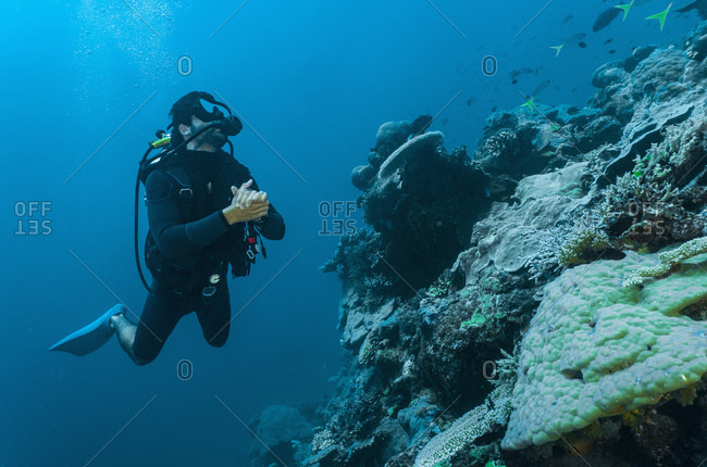 Diver exploring coral at the great barrie reef
