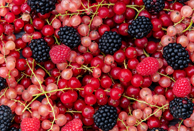 Blackberry, red and white currant viewed from above