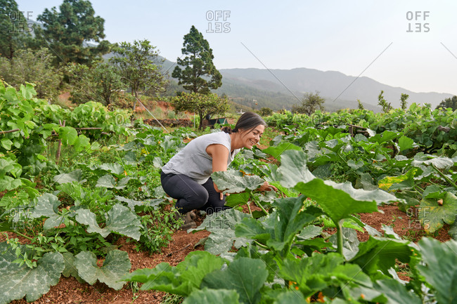 Side view of female farmer along green plants on cloudy day in summer