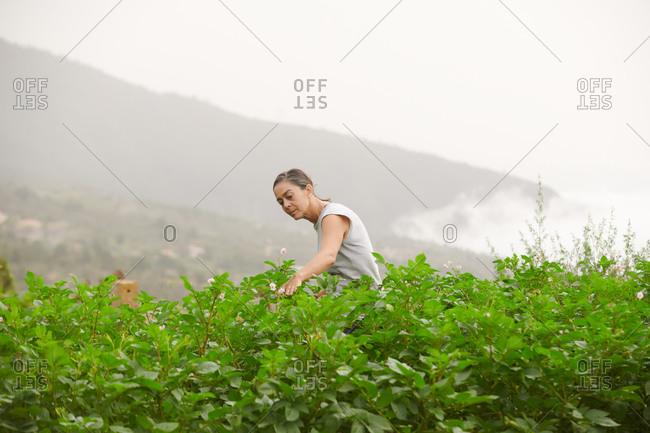 Side view of female farmer walking along green plants on cloudy day in summer