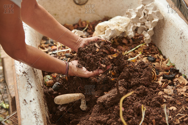 Anonymous crop farmer taking soil with bare hands full of worms from compost pile in countryside