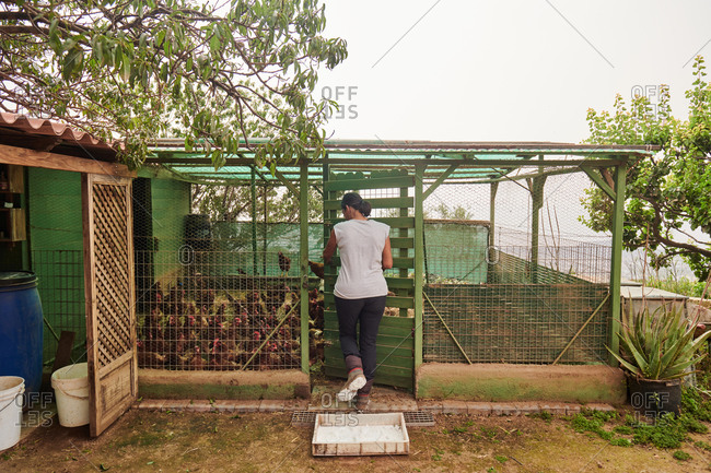 Back view of female farmer entering hen house and feeding chickens on cloudy day in rural area