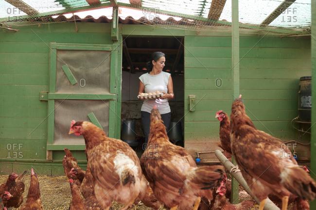 Female farmer in hen house collecting eggs of birds on farm