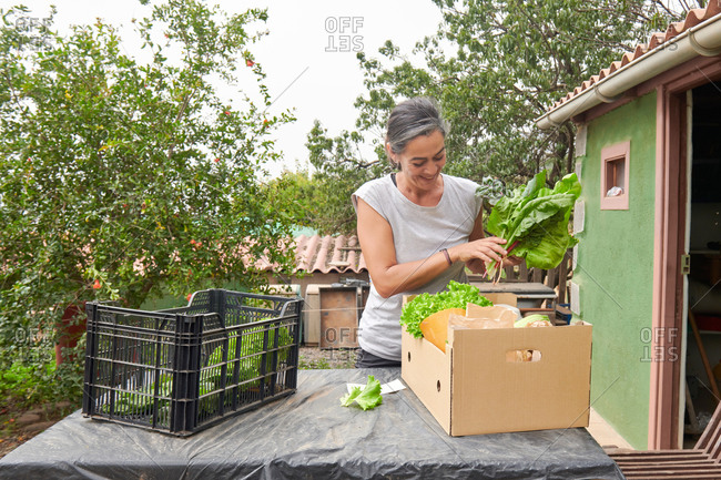 Content senior female farmer standing at table with box of various ripe vegetables in countryside