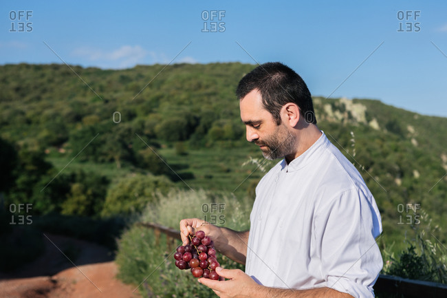 Side view of adult male in white shirt tasting grapes while standing against green mountainous terrain on sunny day