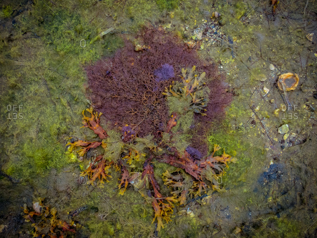 Top view of colorful seaweed with thin stalks and soft texture on shore surrounded by stones of different shape in daylight