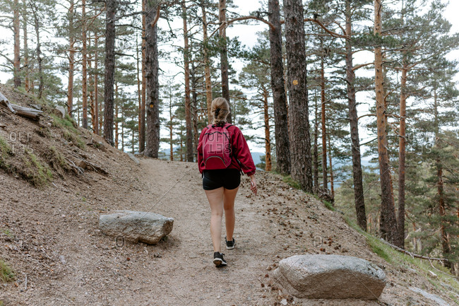 Back view of unrecognizable young woman backpacker walking on stony path among coniferous forest on mountain slope during hiking in Navacerrada in Spain