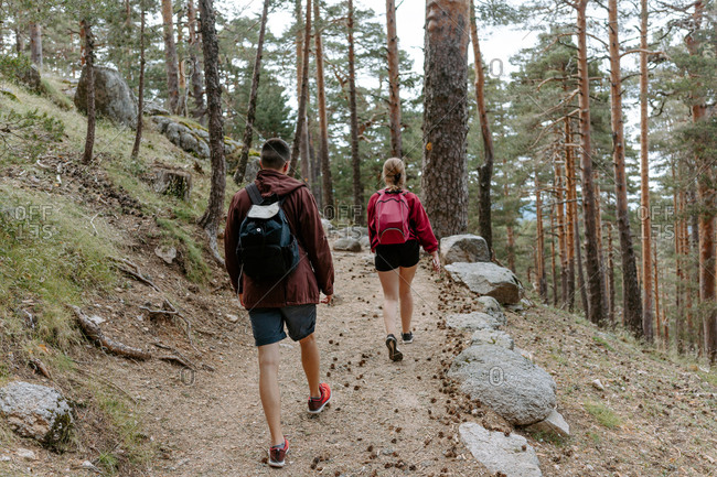 Back view of unrecognizable young couple of backpackers walking on stony path among coniferous forest on mountain slope during hiking in Navacerrada in Spain