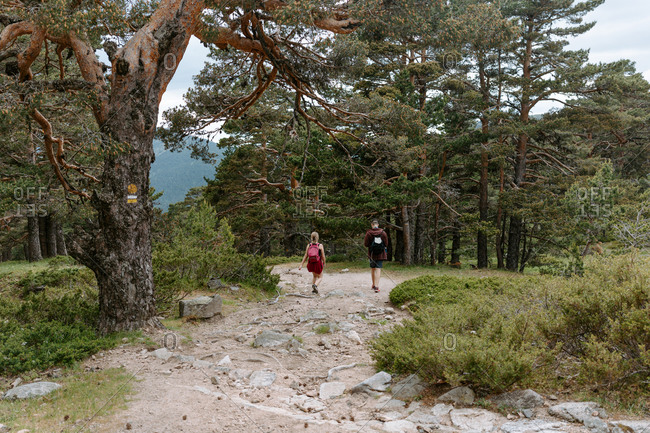 Back view of unrecognizable young couple of travelers with backpacks hiking on path among green forest and mountains in summer day in Navacerrada in Spain