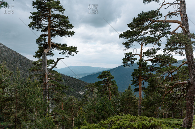 Picturesque scenery of mountains covered with green forest under cloudy sky in summer day in Navacerrada in Spain