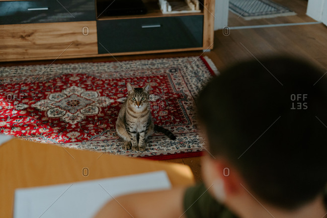 From above of cute tabby cat sitting on floor quietly and looking at crop unrecognizable boy