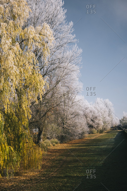 Trees with frozen branches growing along quiet park on sunny day in winter in Burgos