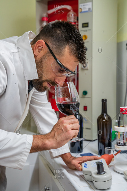 Side view focused male tasting red wine by smelling while working in wine laboratory